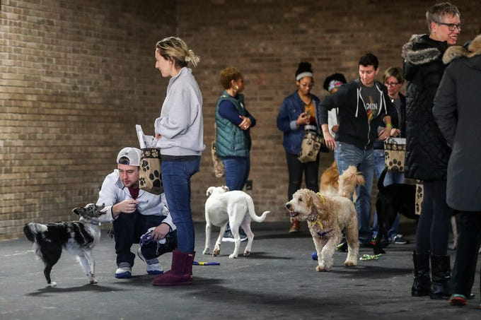 Owners and staff watch as dogs romp around during the grand opening of Indy's Indoor Bark Park in Indianapolis, Saturday, Jan, 5, 2019. The large indoor space offers owners a place to exercise their dogs regardless of the weather. Membership options include single-day, multi-day and annual passes.