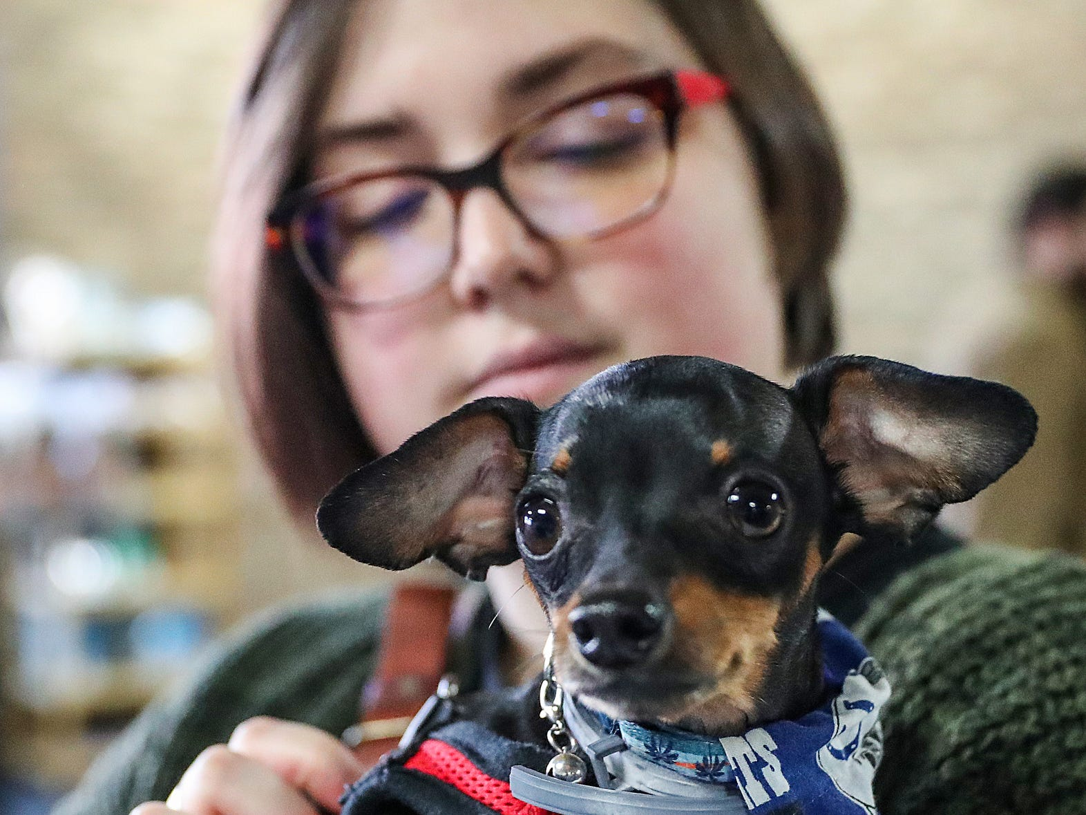 Ciara Chattin holds her mini pinscher Alfie during the grand opening of Indy's Indoor Bark Park in Indianapolis, Saturday, Jan, 5, 2019. The large indoor space offers owners a place to exercise their dogs regardless of the weather. Membership options include single-day, multi-day and annual passes.