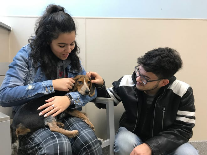 Prospective adopters bond with Pixie at St. Hubert's Animal Welfare Center in Madison Jan. 4, 2018.
