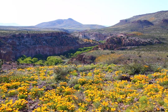 The Gila Lower Box Wilderness Study Area is in southwestern New Mexico about 20 miles northwest of Lordsburg.