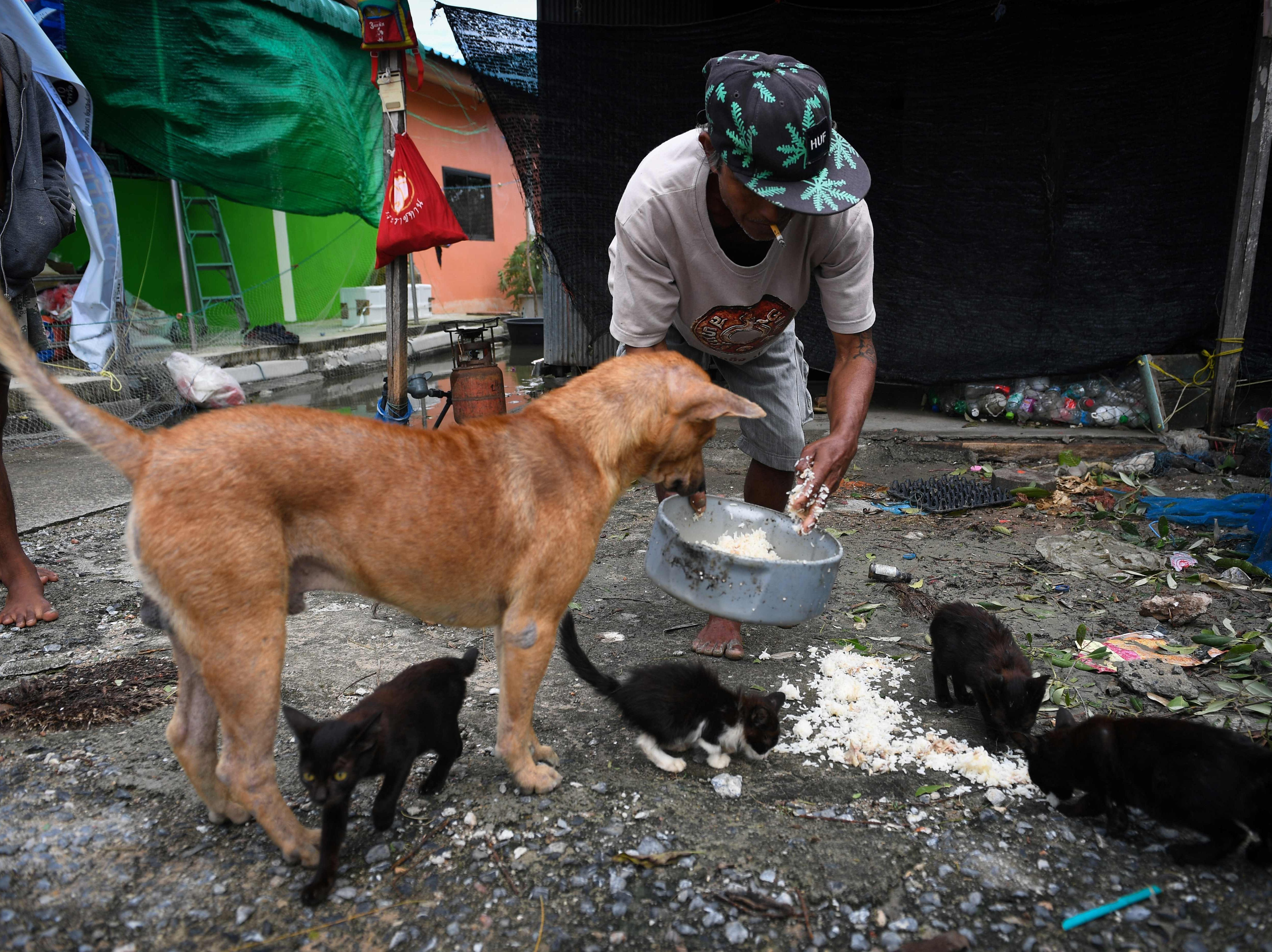 A man feeds his animals in the aftermath of tropical storm Pabuk in the southern Thai province of Nakhon Si Thammarat on Jan. 5, 2019.