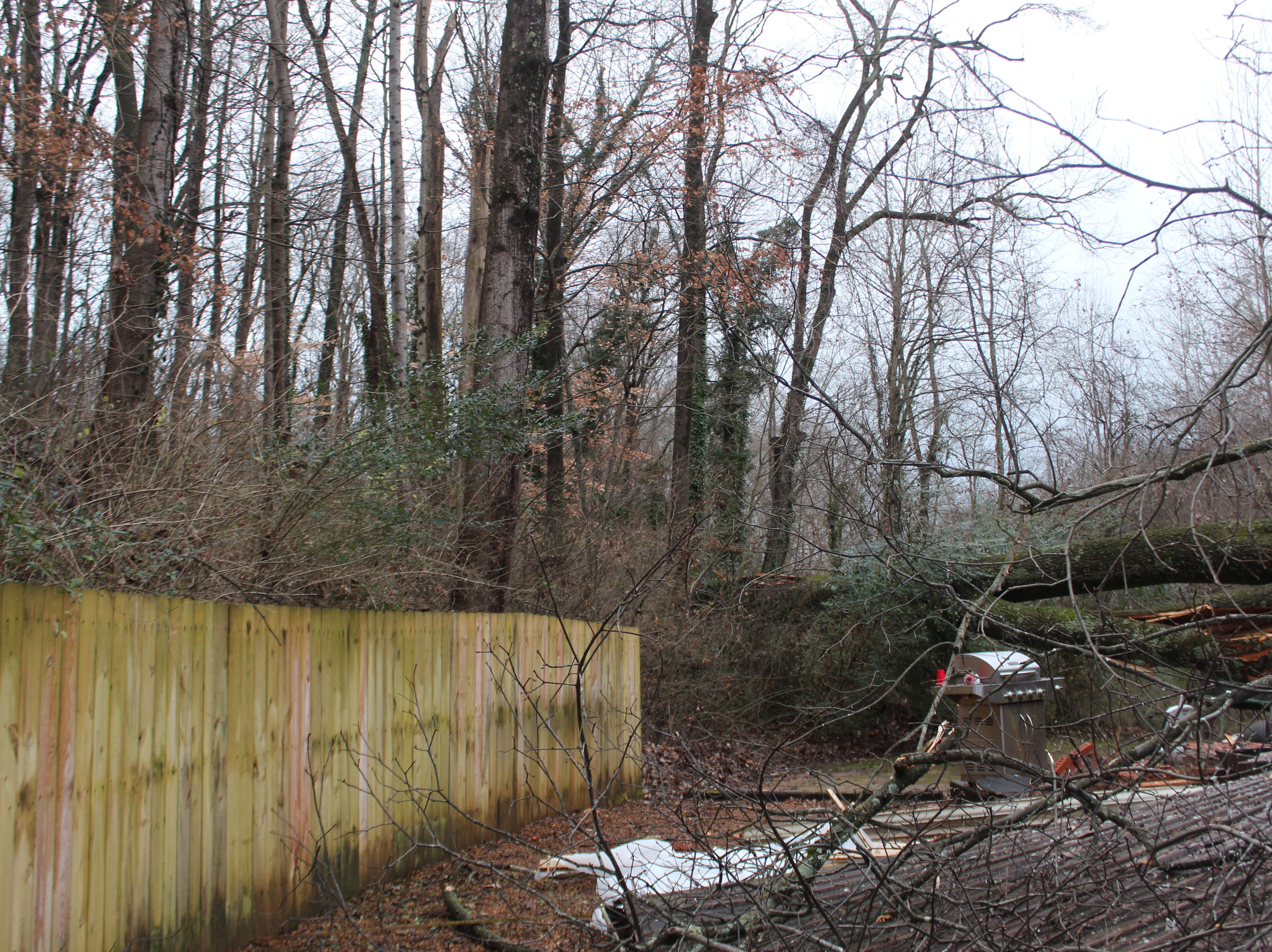 A look at the backyard view of trees that was a selling point for the Tinsley family when they bought the house 8 years ago, but which ultimately destroyed their home when a massive tree came crashing down on New Year's Eve.