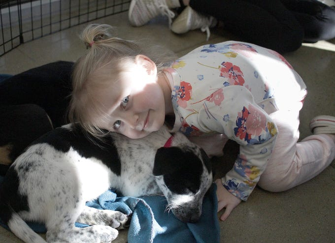 Morgan Pardoe (3) cuddles with the puppies at Jojo's Doghouse adoption event at Pet Supplies Plus in Hendersonville, TN on Saturday, January 5, 2019.