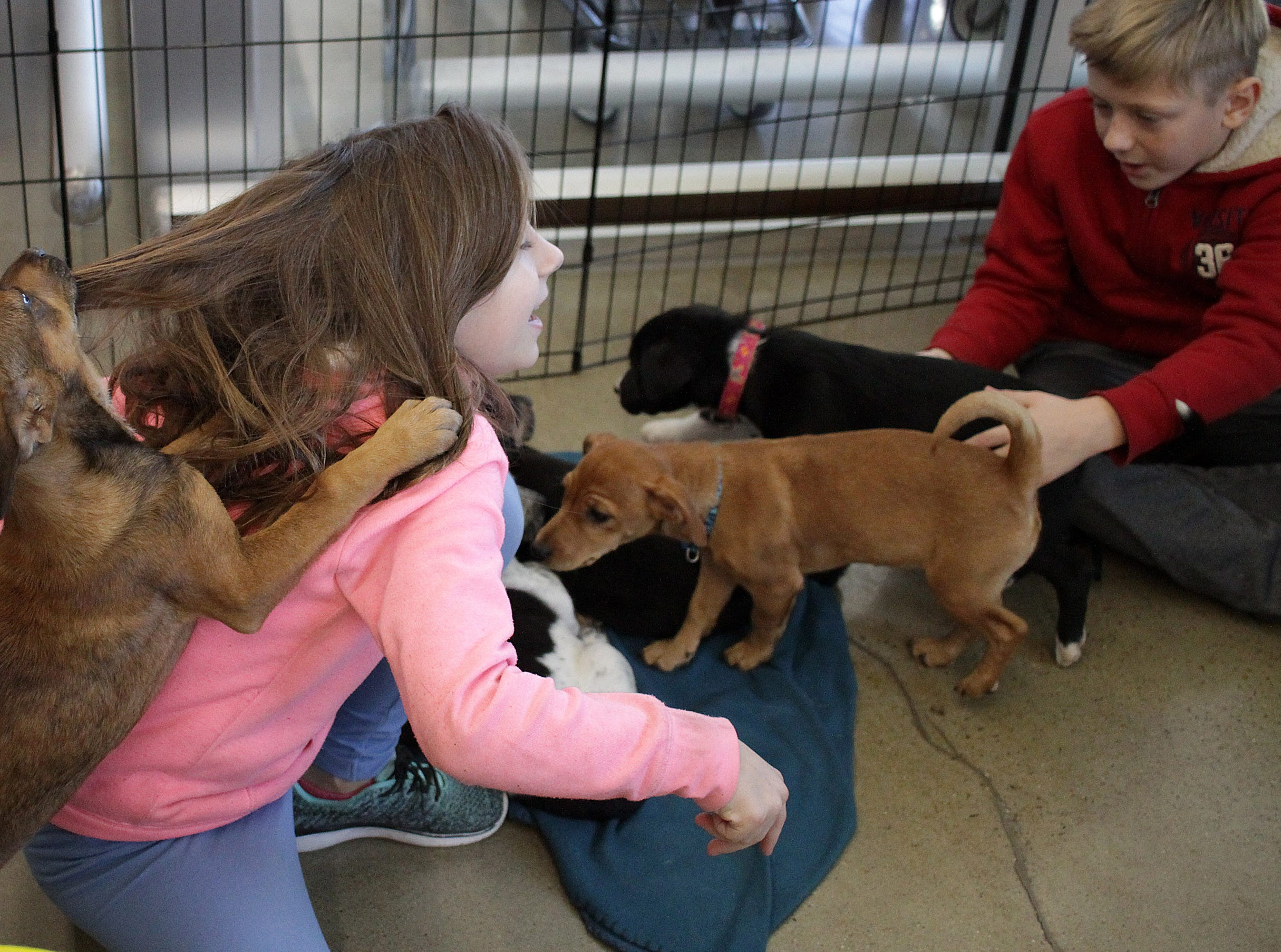 A puppy pulls on the hair of Olivia Humphrey (7) at Jojo's Doghouse adoption event at Pet Supplies Plus in Hendersonville, TN on Saturday, January 5, 2019.