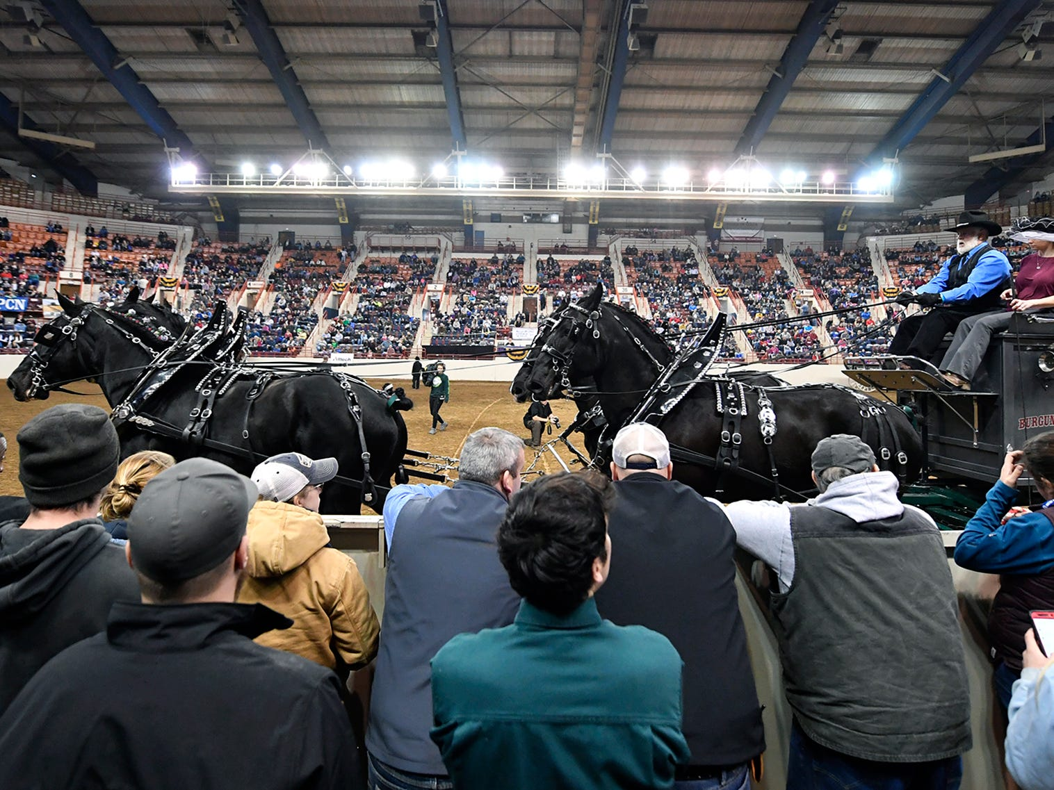 The four horse team from Burgundy Rose Farms in York trot past spectators during the Draft Horse Hitched Competition at the 103rd Pennsylvania Farm Show, Sunday, January 6, 2019. John A. Pavoncello photo