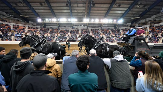 The four horse team from Burgundy Rose Farms in York trot past spectators during the Draft Horse Hitched Competition at the 103rd Pennsylvania Farm Show, Sunday, January 6, 2019. 