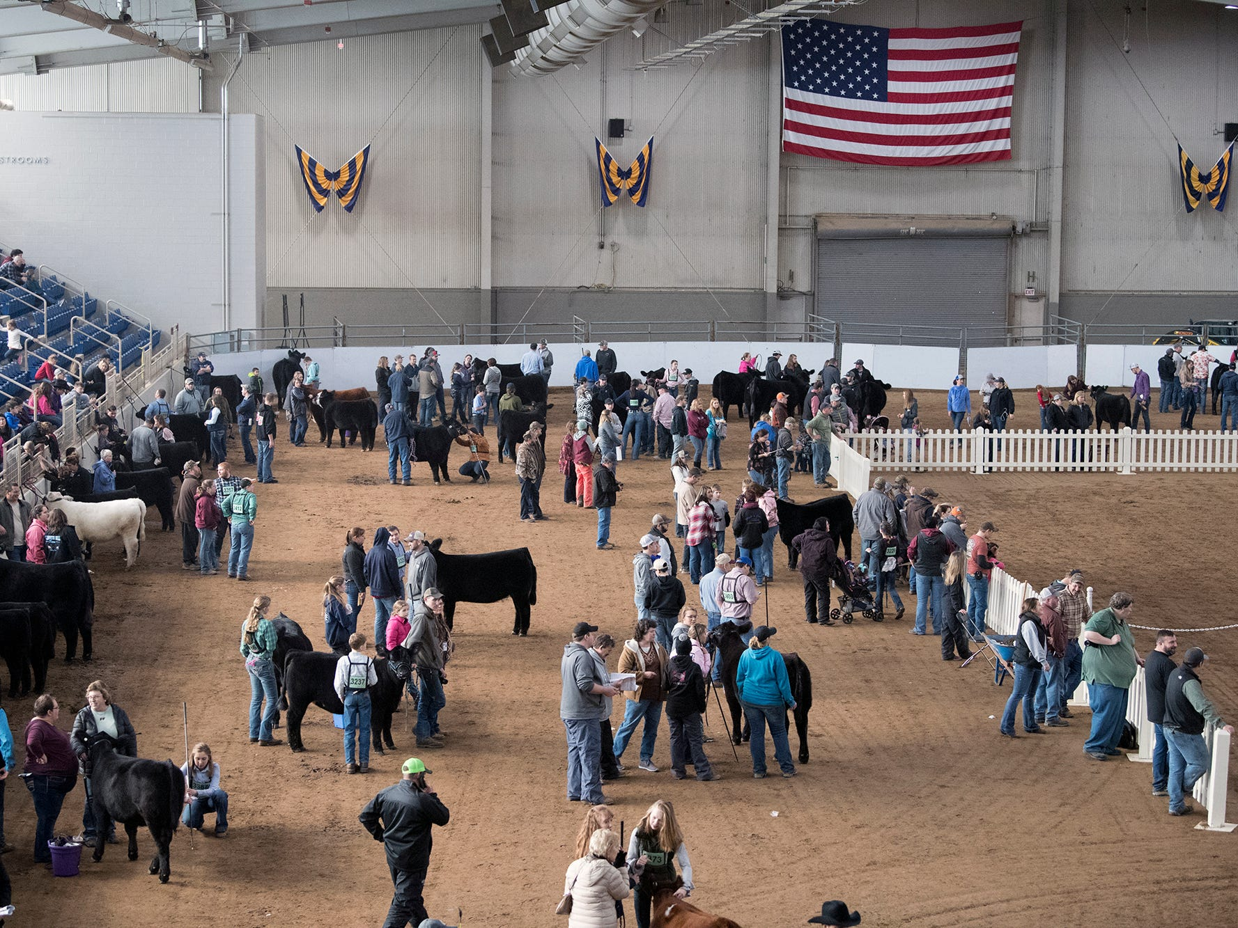 Cattle prep for judging inside The Equine Arena during The 103rd Pennsylvania Farm Show in Harrisburg Sunday January 6, 2019.
