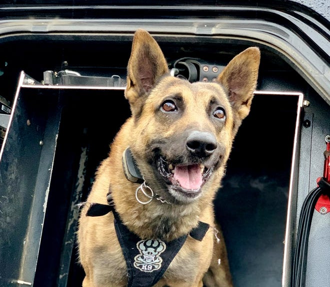 K-9 Chance of the Anderson Police Department is back on duty after he was injured during a pursuit Dec. 29, 2018. A man is suspected of shooting Chance in the ear with a handgun.