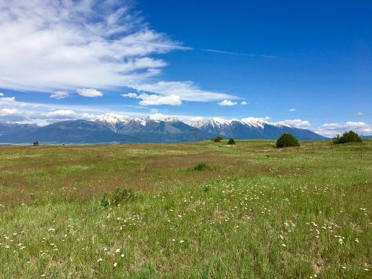 Montana meadows and mountains