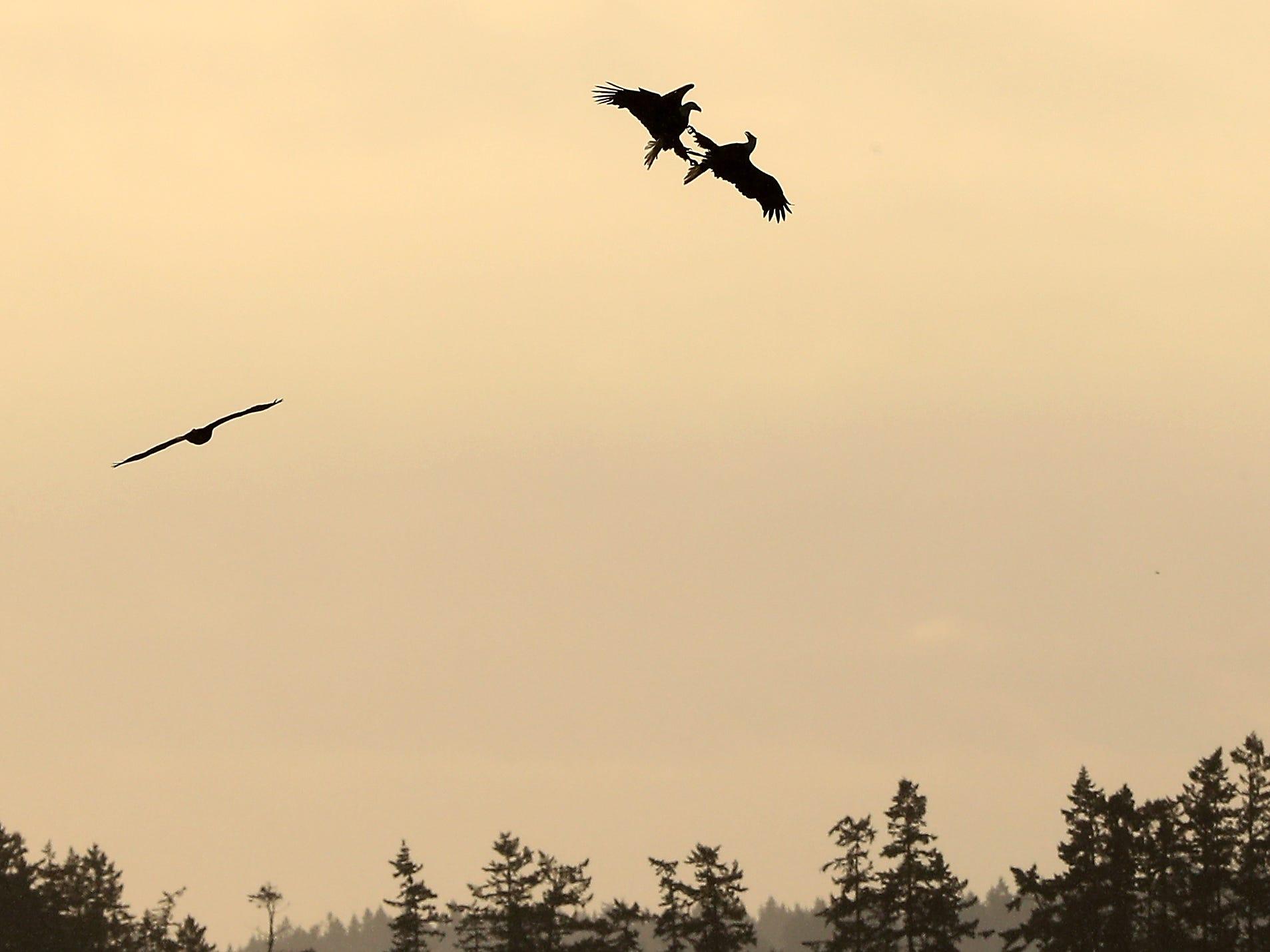Bald eagles are silhouetted against the hazy sky as they spar above Bainbridge Island's Eagle Harbor on Friday, January 4, 2019. (Meegan M. Reid / Kitsap Sun)