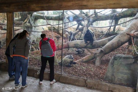 The Cincinnati Zoo & Botanical Garden earned LEED Platinum certification for the new, indoor Gorilla World habitat.