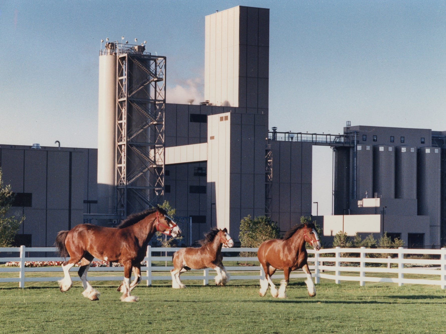 Magnum, Dewey and Robby frolic inside the paddock of Fort Collins' Anheuser-Busch in September 1990.