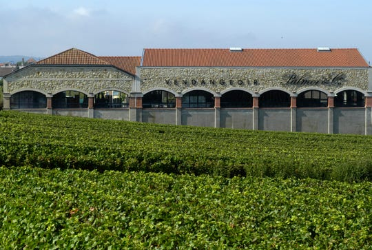 Rows of vines at Palmer & Co. in Champagne, France.
