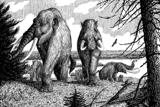 As this illustration of mastodons along the Hackensack River shows, bald eagles lived here long before us humans.