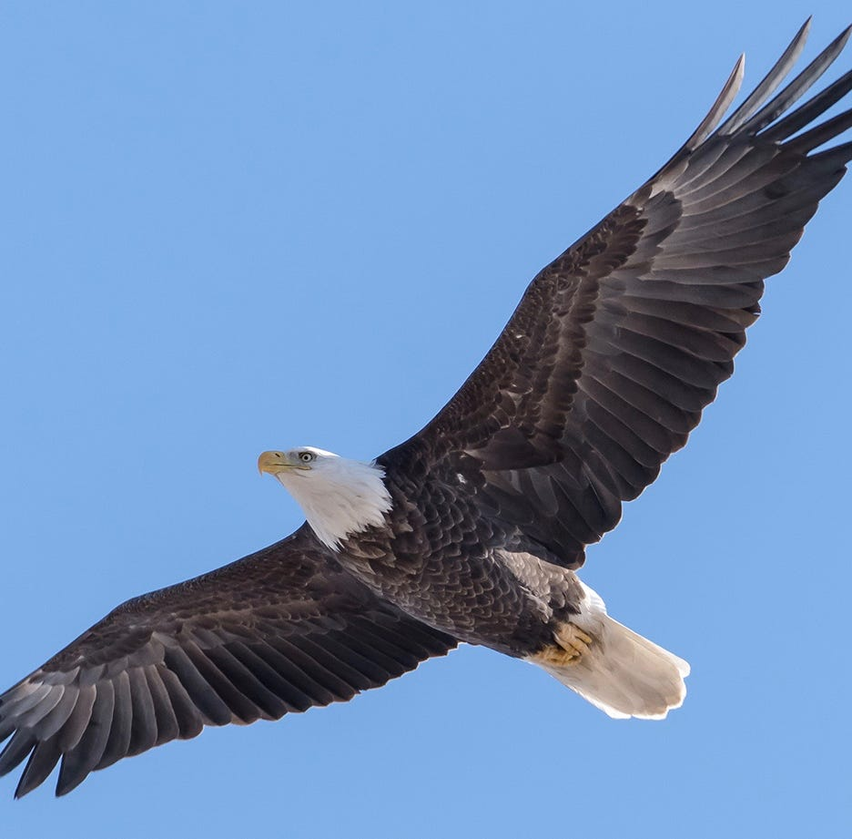 Eagle Fest soars into River Edge marking its third year