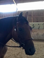 Ed, whose papered name was Fairly Exceptional, was killed in a hit-and-run in Mendon on Friday, January 4, 2019. He was a 21-year-old retired racehorse and grandson of the 1978 Triple Crown winner Affirmed.