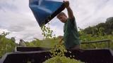 Three generations make Lakewood Winery a Finger Lakes success.