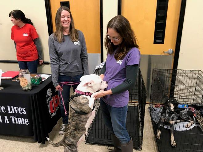 """Celeste"" greets Amy Hammer of Augusta Dog Adoptions on Saturday, Jan. 5, 2019, at PetSmart in Waynesboro as volunteer Becker Halterman looks on."