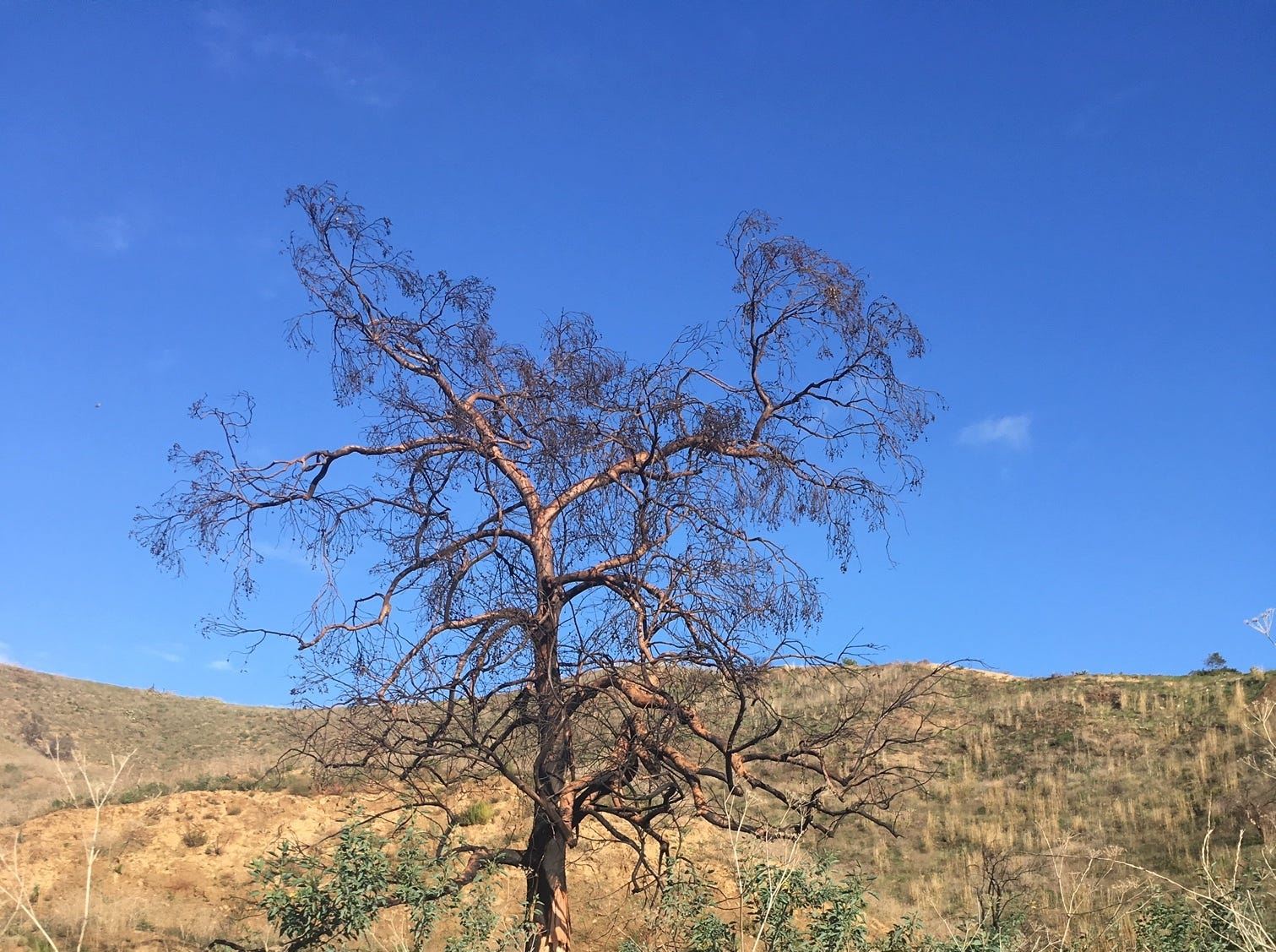 Flowers sprout next to a burned tree in Arroyo Verde Park in Ventura.