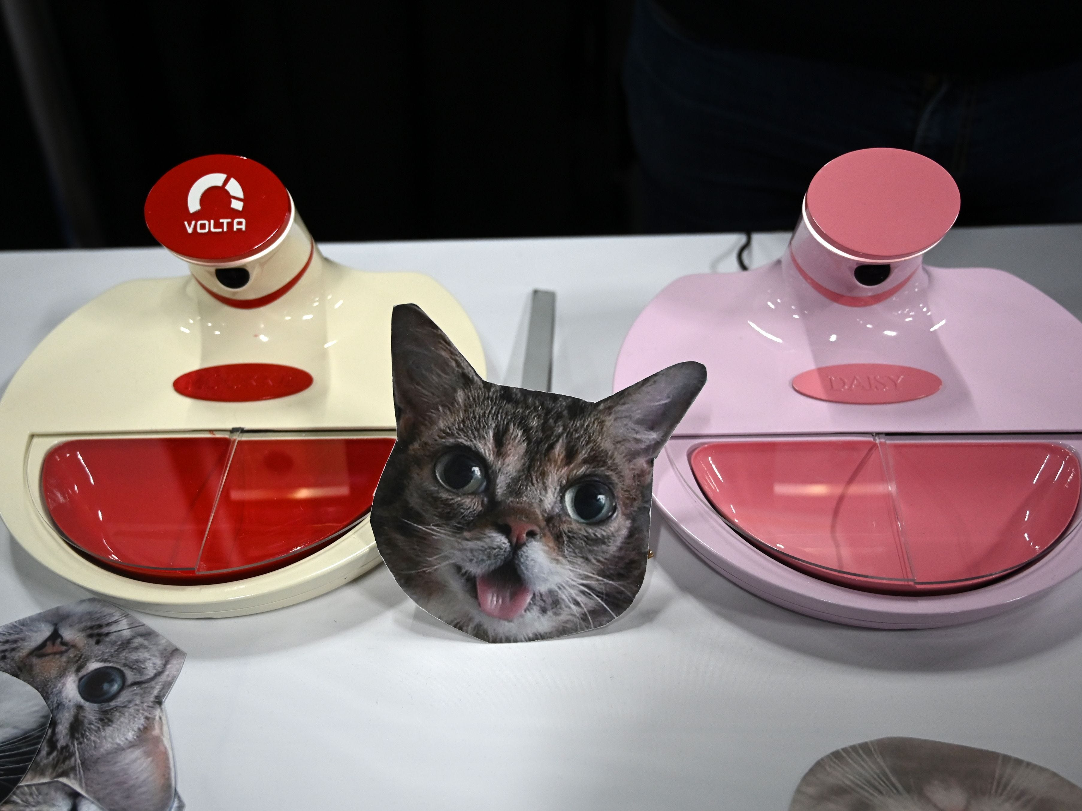 This is a Mookkie, a smart pet feeder which recognizes individual animals.