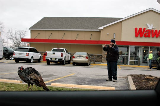 A customer takes a photo of Uncle Vinny, a wild turkey who hangs out at the Wawa on Cinnaminson Avenue in Palmyra.