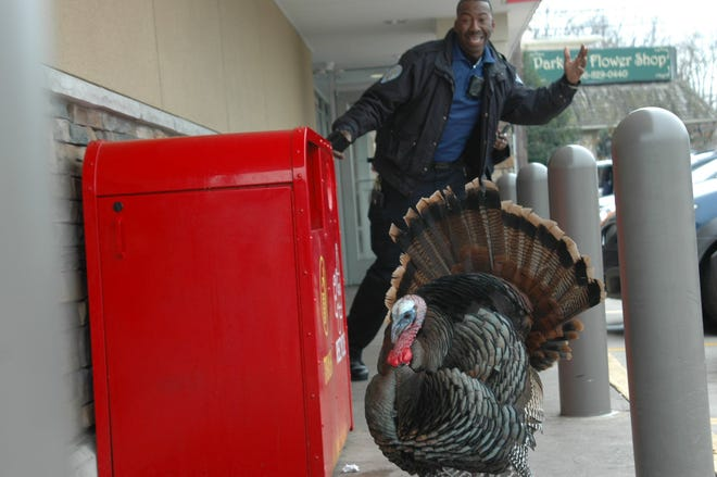 An officer poses behind Uncle Vinny, a wild turkey who frequents the Cinnaminson Avenue Wawa parking lot in Palmyra.