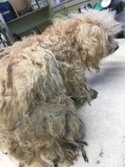 Nine dogs with severely matted fur were left in the parking lot of Furry Friends Refuge on Monday, the no-kill shelter said.