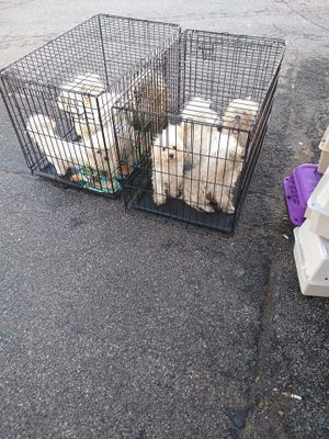 Nine dogs were left in the parking lot of Furry Friends Refuge on Monday, the West Des Moines shelter said.
