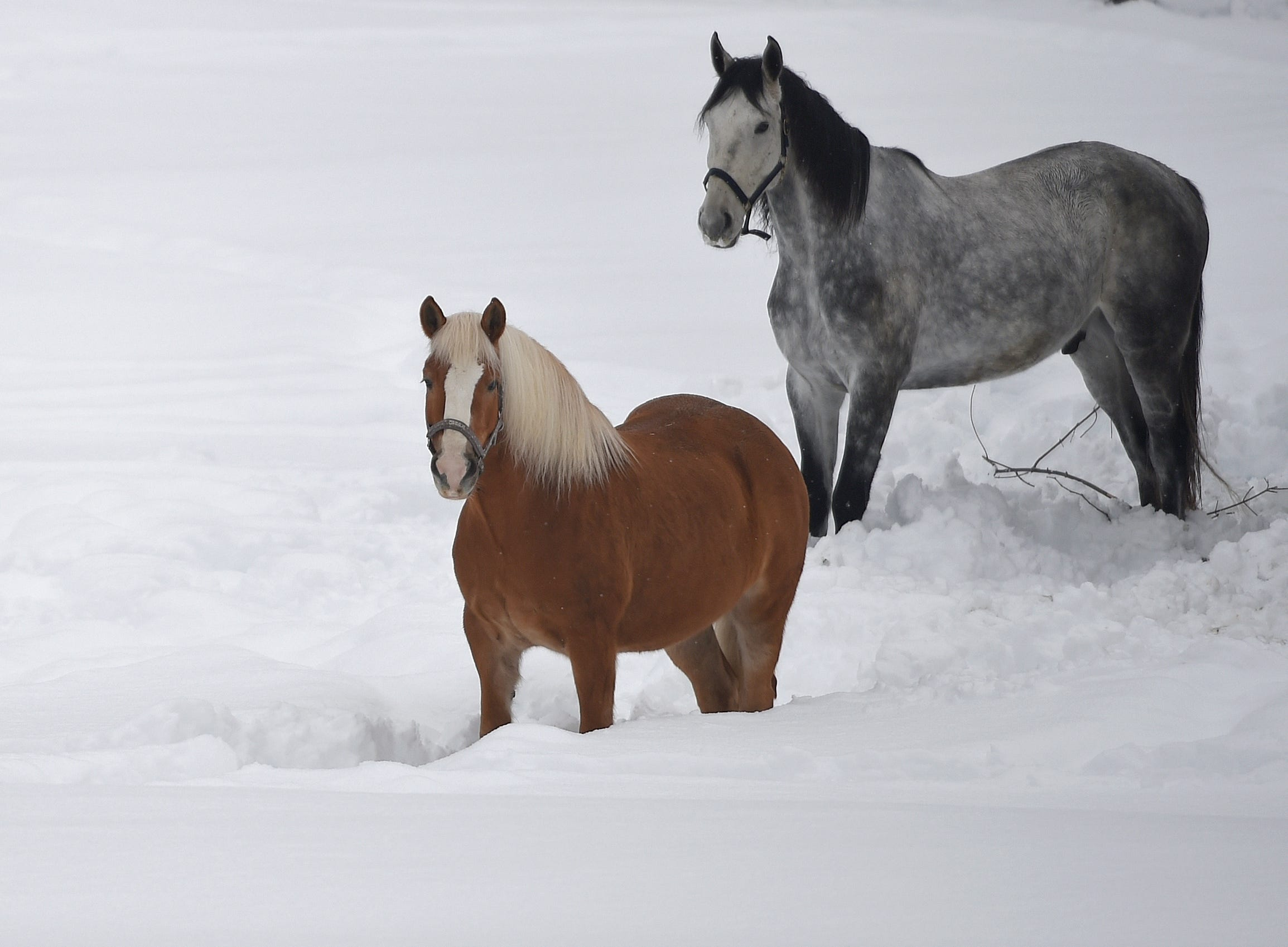 Horses stand in the snow  in Garmisch-Partenkirchen, southern Germany, Monday. Jan. 7,  2019, after large parts of southern Germany and Austria were hit by heavy snowfall.