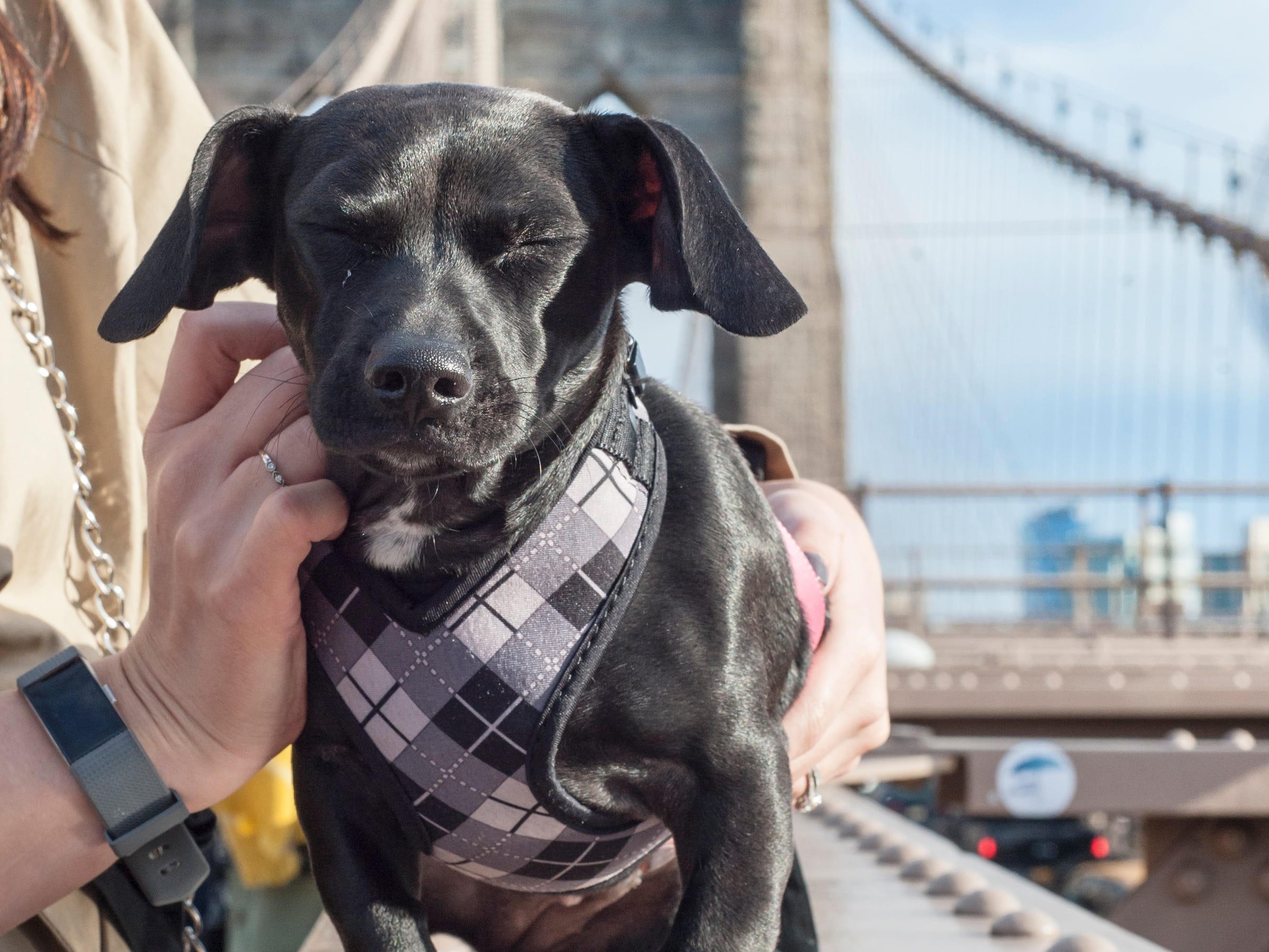 Molly Mae takes in the sights of New York City. She was in NYC for taping of Animal Planet's 2019 Puppy Bowl. It will air on Feb. 3.