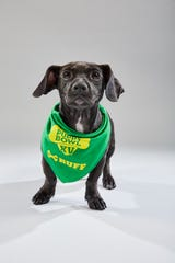 Molly Mae, a puppy brought to Young-Williams Animal Center last year, will take part in Animal Planet's annual Puppy Bowl on Feb. 3.