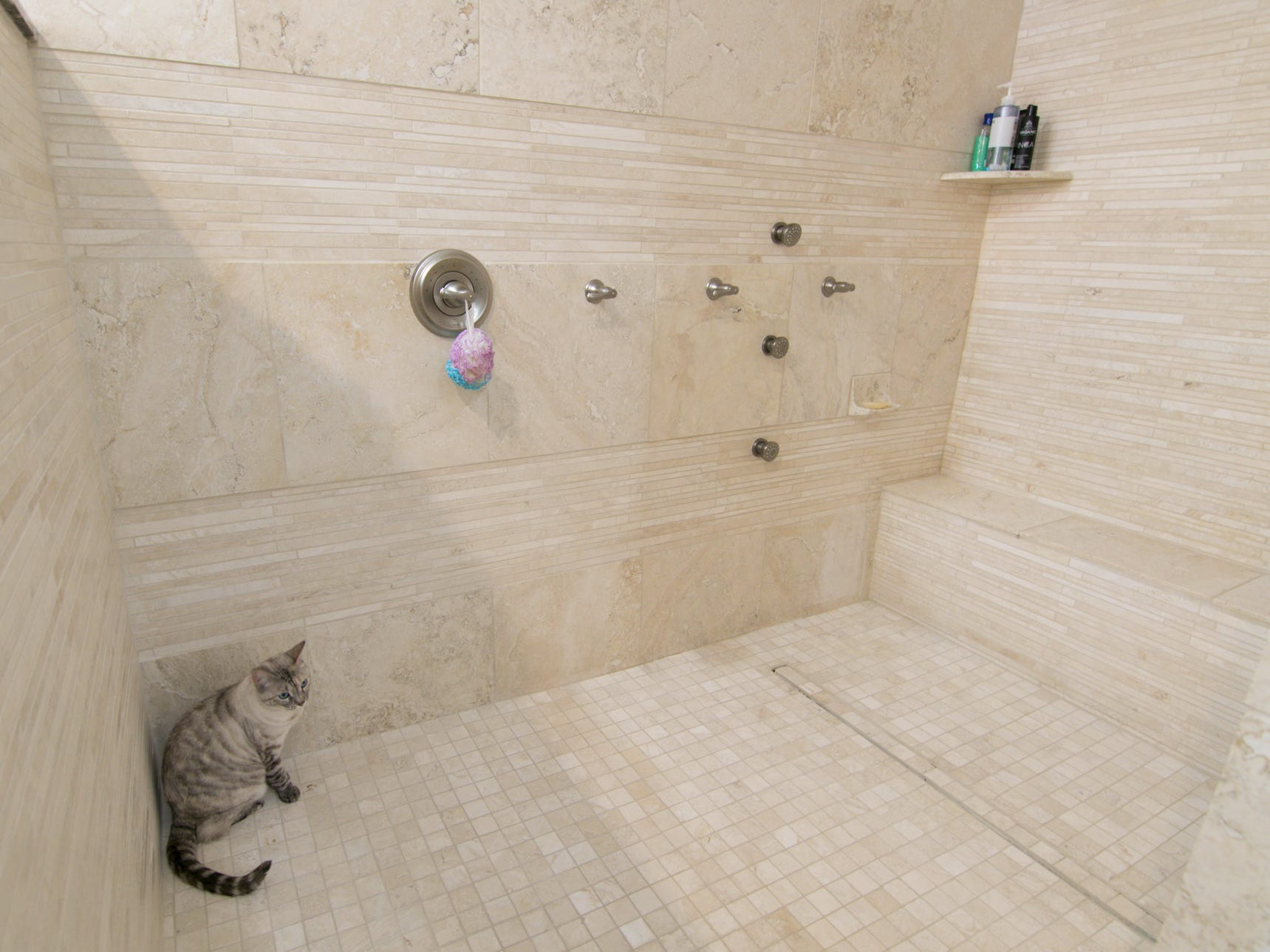 A Bengal ragdoll cat, the pet of Adam and Michelle Harris, takes refuge inside the master shower in the home on Worden Lake shown Friday, Jan. 4, 2019.