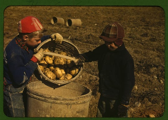 Boys harvesting potatoes near Caribou, Maine in 1940. Area schools only opened after the potato harvest was completed.
