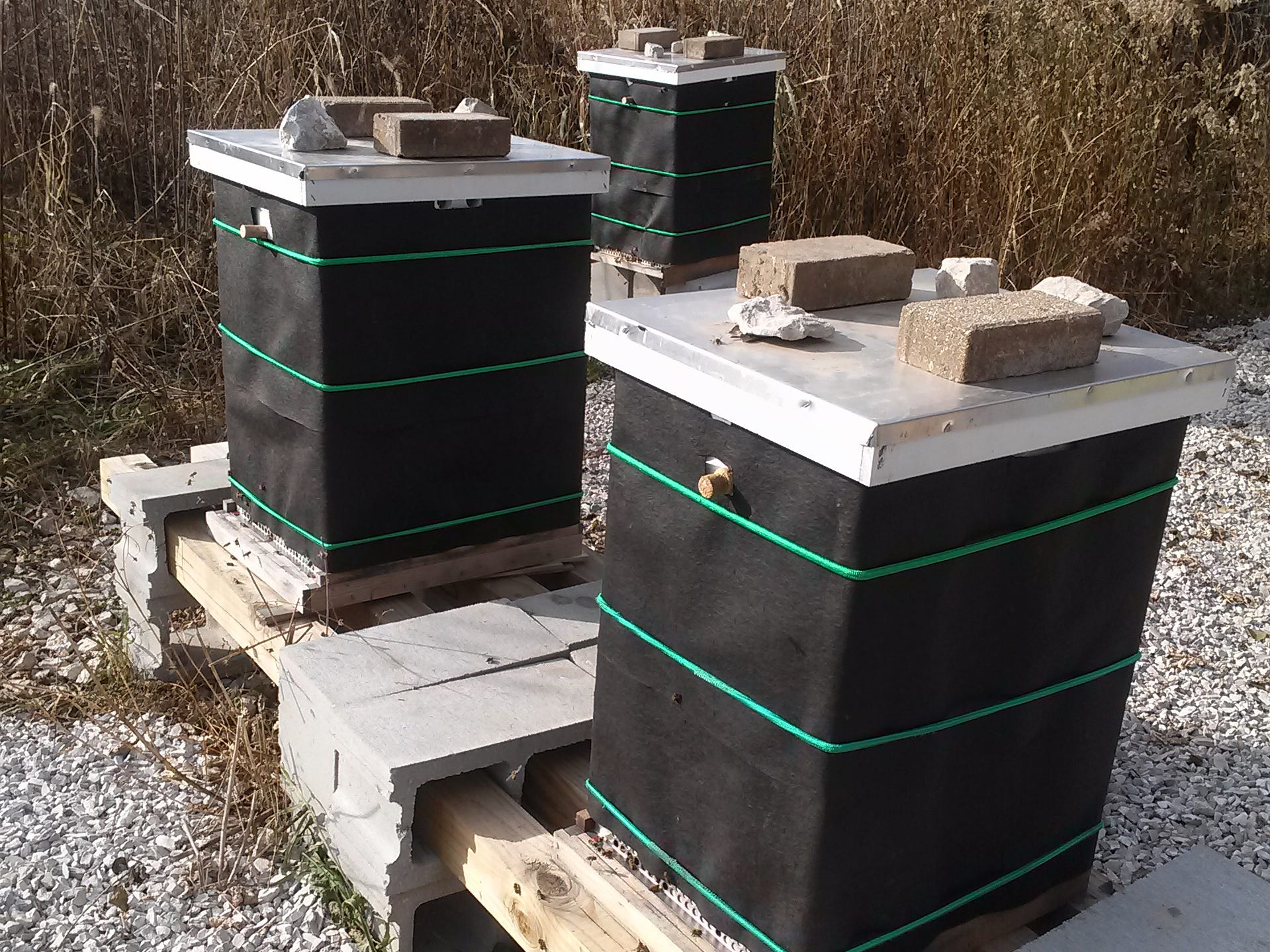 This is how hives look when winterized, wrapped in roofing felt (tar paper), with a quilting box and shim for winter feeding added atop the two brood boxes, plus a mouse guard at the entrance.