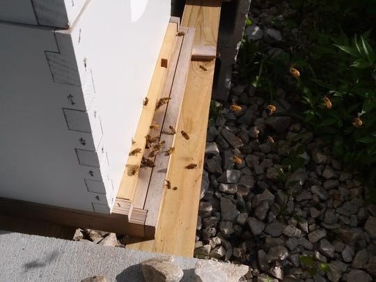 A typical summer shot of bee traffic in and out of a hive.