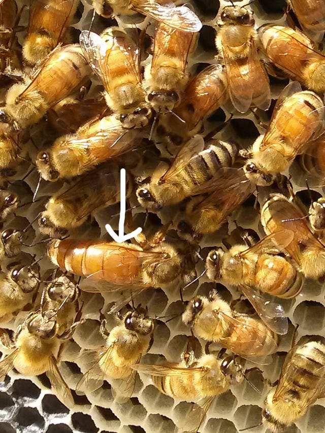 Beekeeping takes planning and commitment but yields sweet