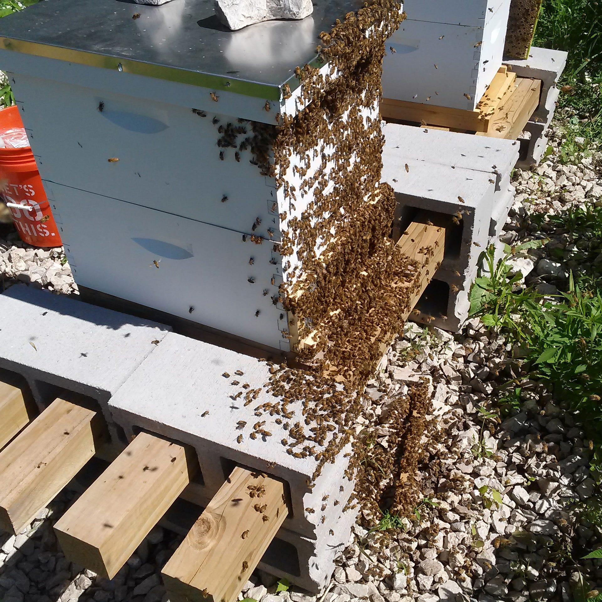 So you want to be a beekeeper? You're in for a wild ride before you get your sweet reward