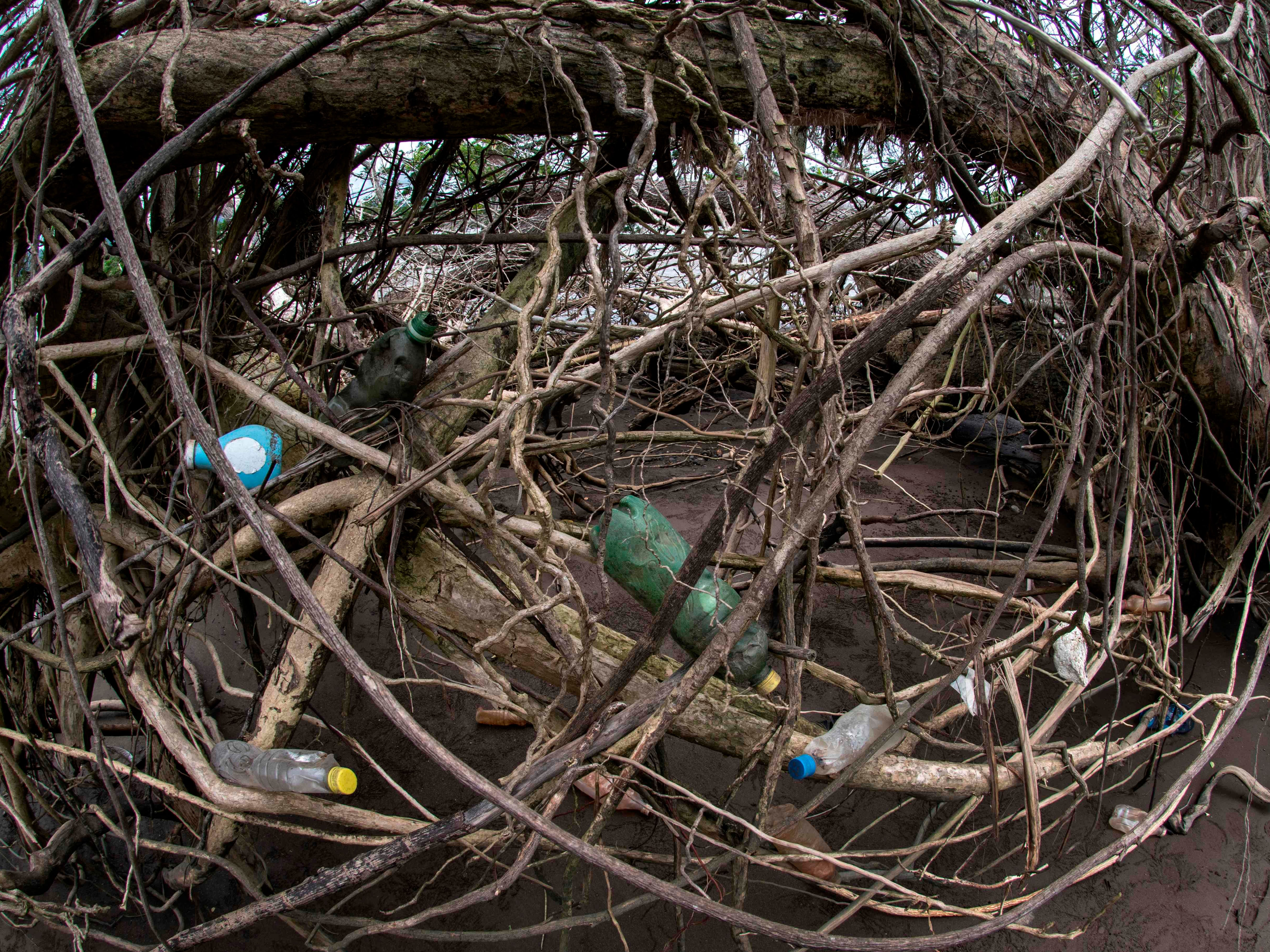 Plastic waste dots the mangroves at Guacalillo beach, Costa Rica, on Aug. 14, 2018. Costa Rica discards 564 tons of plastic per day, of which only 14 are recycled, according to the government. Since April 2018, a program seeks to stimulate recycling by giving value to waste through the exchange of it for a virtual currency that allows users to make purchases at stores linked with the initiative.