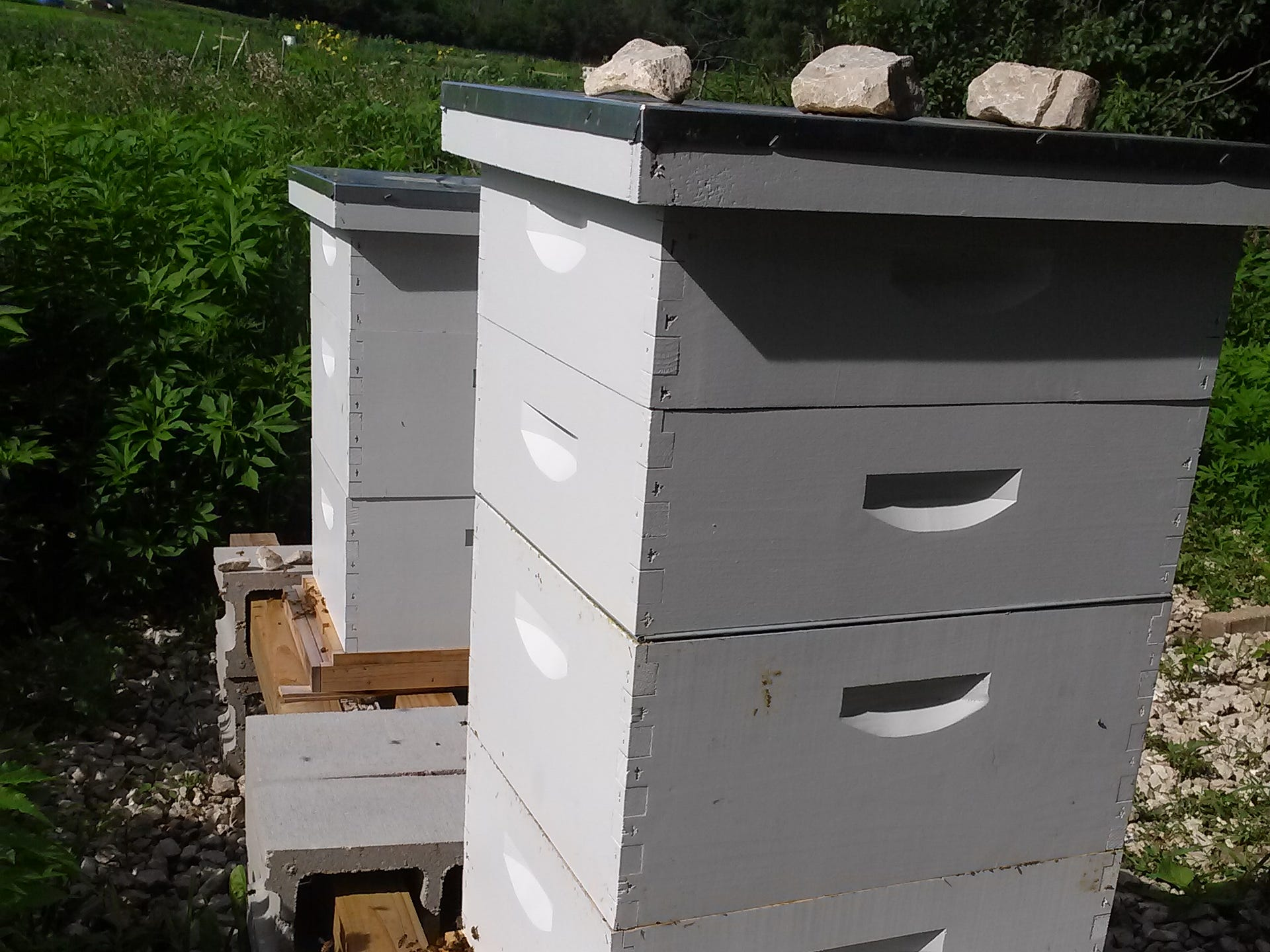 """This photo was taken after a swarm. Beekeeper Gemma Tarlach left Hive 2, on the left, alone because this was the delicate period of re-queening and if the bees are disturbed, they may blame the new queen and kill her (bees don't mess around). Hive 1, on the right, was growing and needed more space so she added a couple of """"honey super"""" boxes (on top of the two deeper brood boxes) to give them more space and also encourage them to stop thinking about swarming and instead spend their time making honey."""