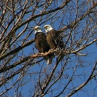 Family adventure: Head to West Tennessee for eagle watching, history and more