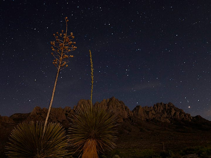 """""""Yuccas In Baylor Canyon,"""" by Anne Chase, a Doña Ana Photography Club Blue Ribbon Award Winner 2018."""