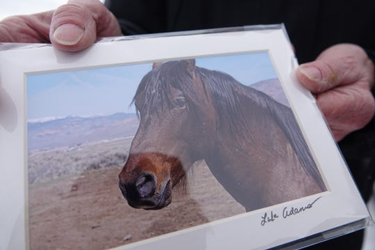 Kate Carlson of Palomino Valley shows a photo of Gentle Warrior, a horse she says was wrongly included in a Pyramid Lake Paiute Tribe feral horse roundup. She fears the horse will be sent to slaughter.