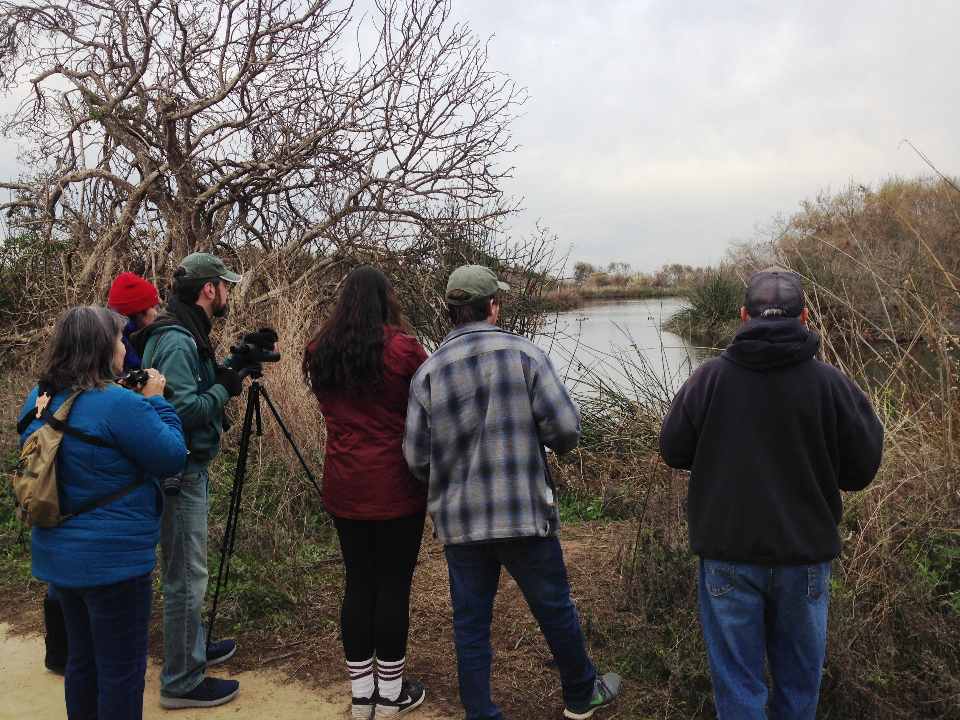 Birdwatchers look at ducks and other birds during the Christmas Bird Count on Saturday at the Ventura settling ponds. Last year's local count yielded 175 species and more than 23,000 individual birds.