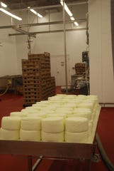 After the cheese is made and removed from its forms, it cures on racks and then in cold-storage areas. Salemville manager Nelson Schrock explains that once blue cheese is made in a facility, the mold that is necessary to produce that cheese becomes dominant in that environment and makes it difficult to make any other kind of cheese, like cheddar for example. So they have built their process on blue and related gorgonzola cheeses.