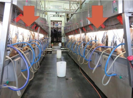 The installation of car wash lights under the manure decks in the parlor allow milkers to see and clean teats much more effectively.The lights are waterproof and can withstand cleaning chemicals.