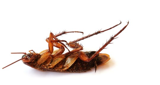 Roaches can be hard to kill.