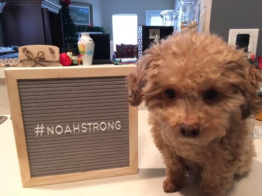 A dog in Georgia shows Noah Anderson love.