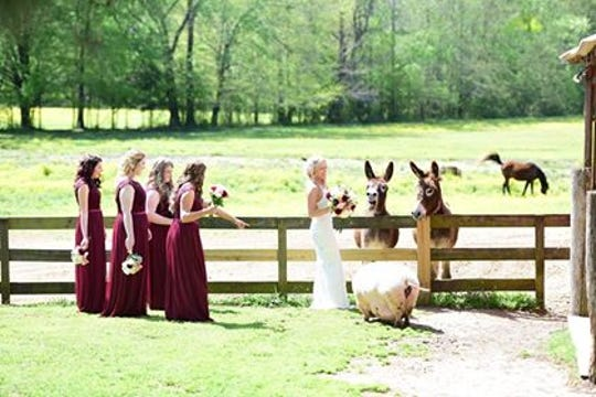 Wedding at Cogan's Farm, which is now a wedding and event venue. The farm was orginally built in the late 1800's, but was bought by the Whiteheads in 1992 and renovated over the next 20 years.