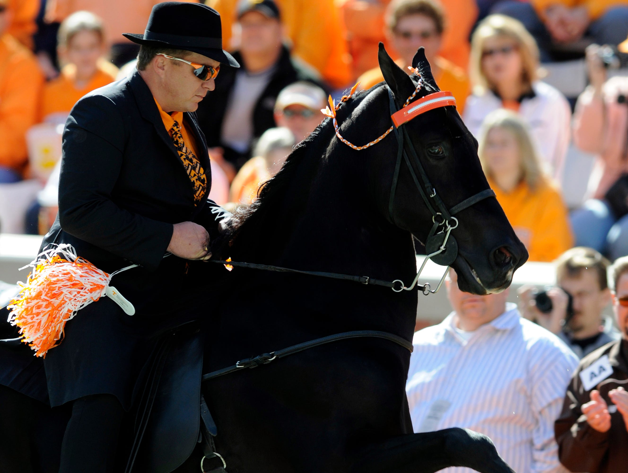 Tennessee Walking horse Santana's El Nino ridden by Link Webb runs around Shields Watkins Field before the start of the Volunteers homecoming game against the University of Wyoming Cowboys Saturday in Neyland Stadium.