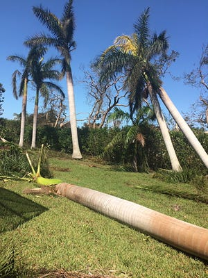 This is how Irma left the couple's backyard.